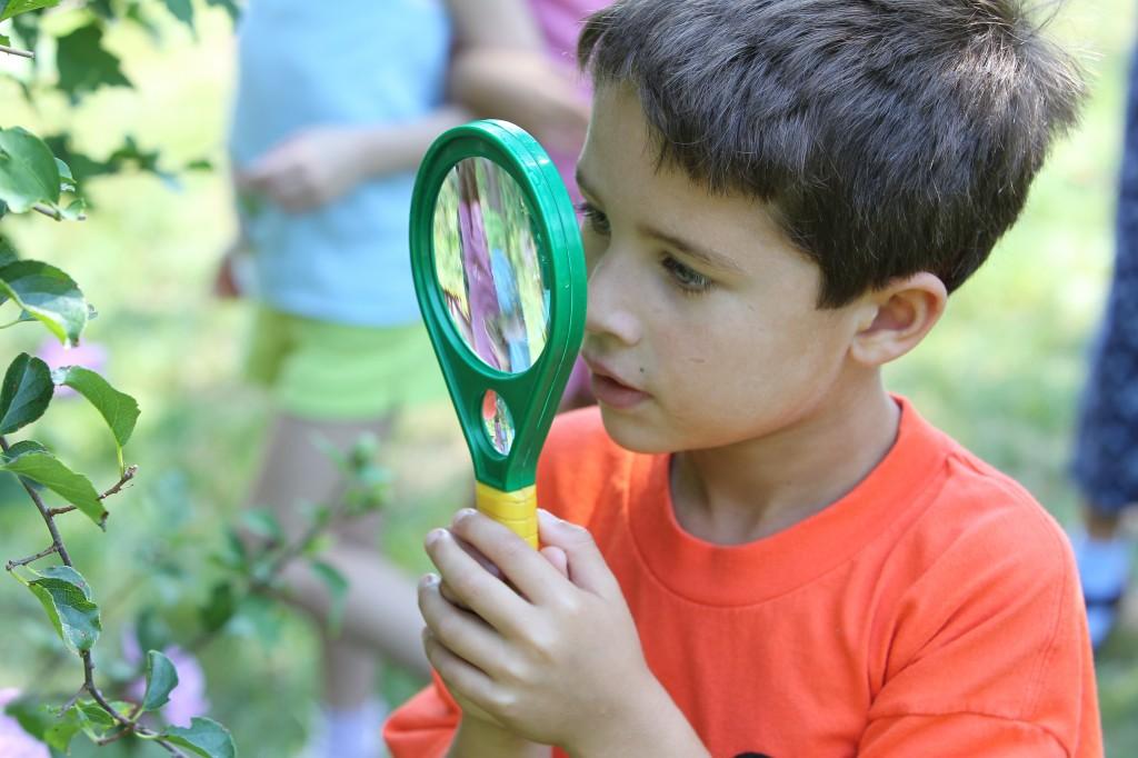 Montessori cosmic education essay